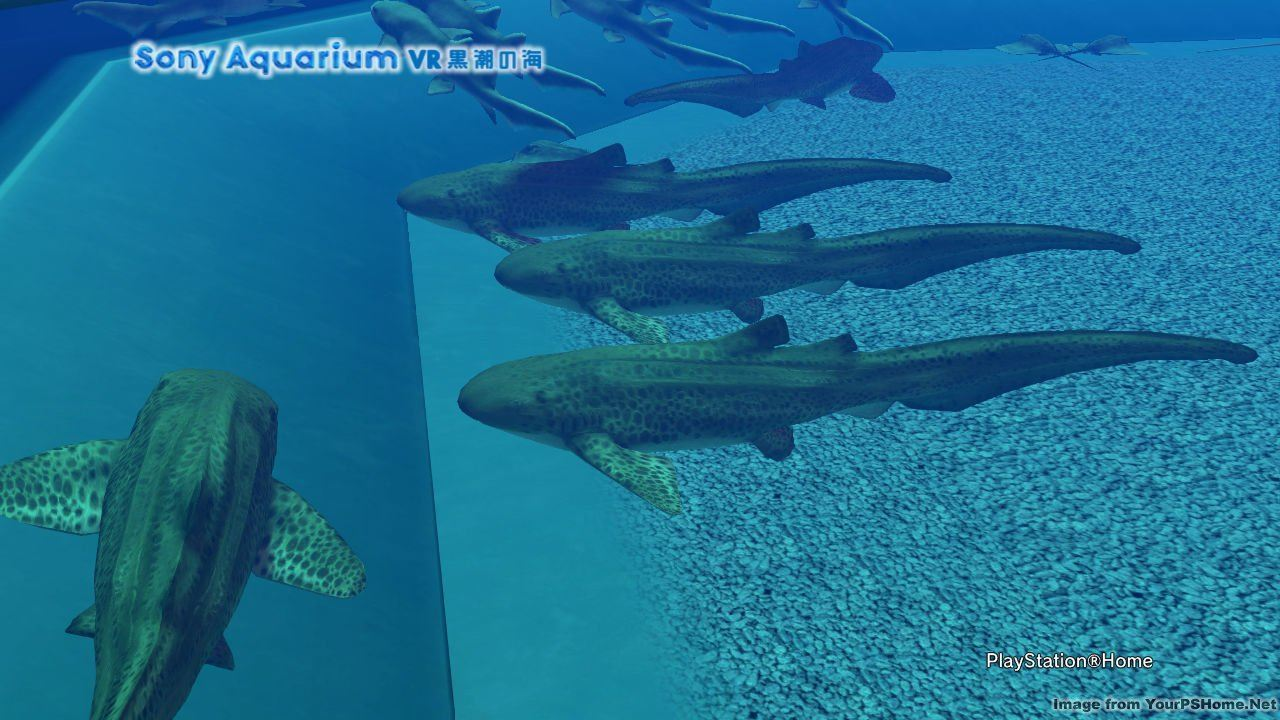 THE PHOTO ART CLUB, kwoman32, Jul 15, 2014, 6:09 AM, YourPSHome.net, jpg, Sony Aquarium VR 黒潮の海.jpg