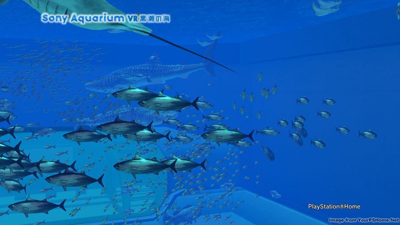 THE PHOTO ART CLUB, kwoman32, Jul 15, 2014, 6:09 AM, YourPSHome.net, jpg, Sony Aquarium VR 黒潮の海_1.jpg